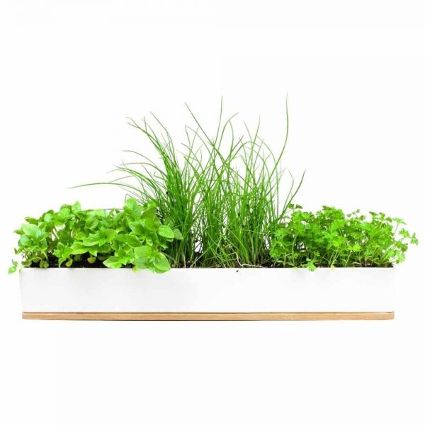 Micro Herbs Windowsill Kit