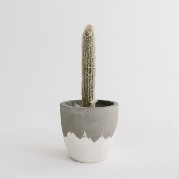 Fox & Ramona - Grey White Wash Concrete Planter - L